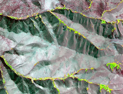 High resolution (10-m) model of riparian vegetation type in the central Great Basin (Nevada, U.S.A.)